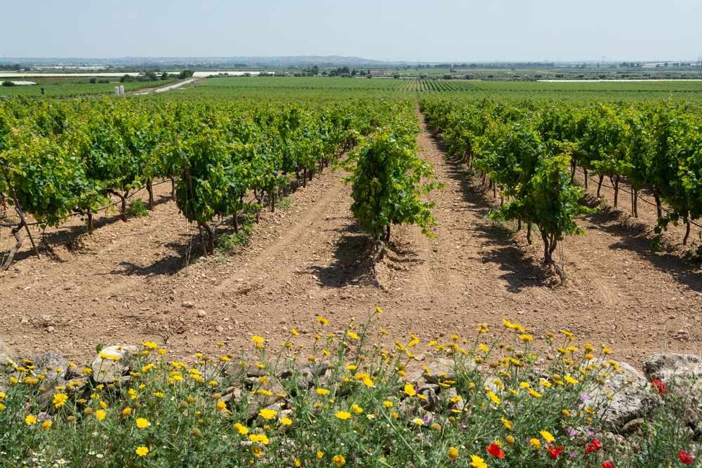 Vini del Salento: le cantine vitivinicole da visitare